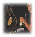 X Antencio controls the movements of one of the Tiki Birds